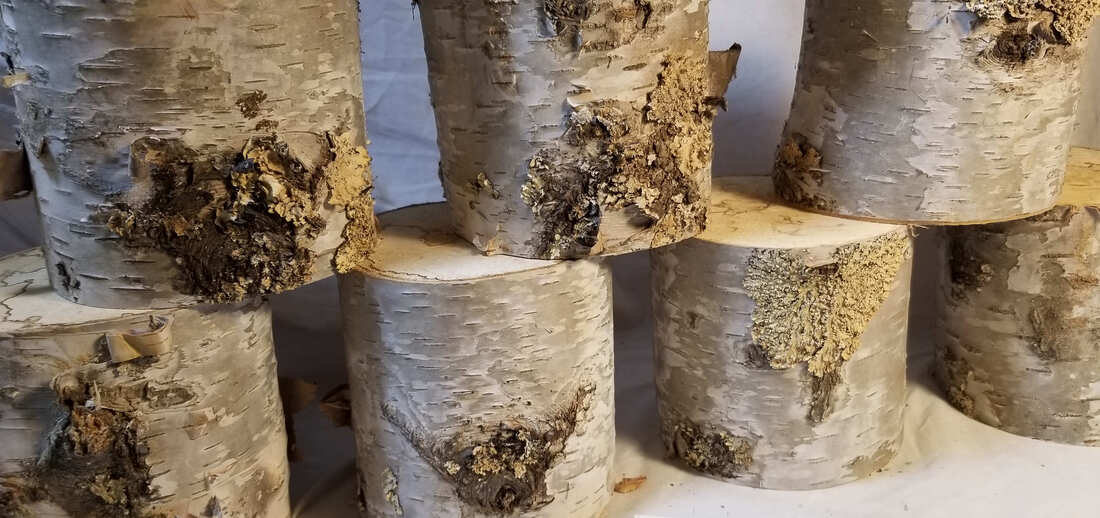 Moss on Birch Log Pillars